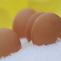 Freeze the egg, freeze the responsibility? Reproduktionsmedizin und 'Social Freezing'